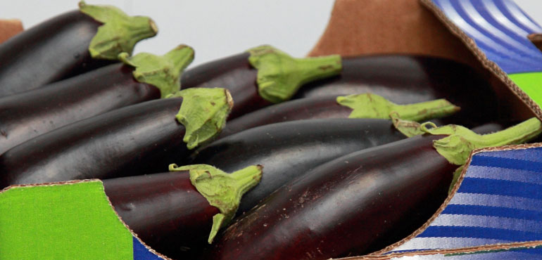 Eggplants from Greece