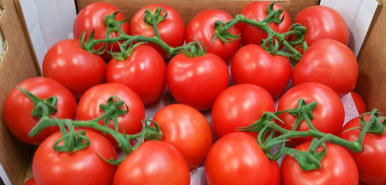 Tomatoes from Greece
